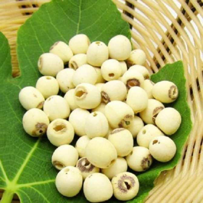 Bạn nên sử dụng hạt sen tươi để nấu lẩu đuôi bò hầm được ngon và bổ dưỡng nhất