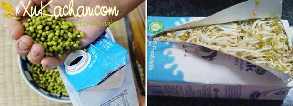Làm giá đỗ bằng vỏ hộp sữa - cach lam gia do bang vo hop sua